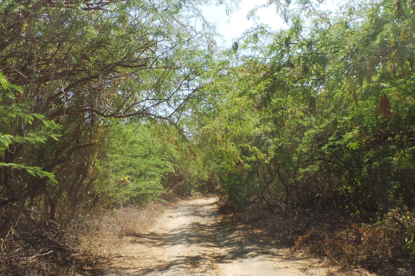 Unpaved road leading to the Parola