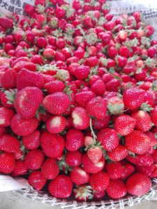 Freshly-picked strawberries. Mouth-watering!