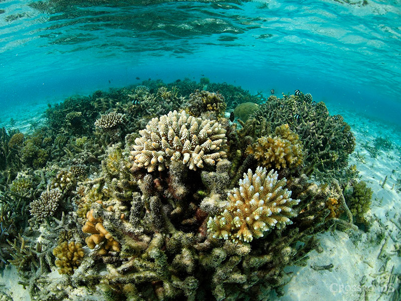 Explore the Shallow Coral Reef at the Coral Village Maldives