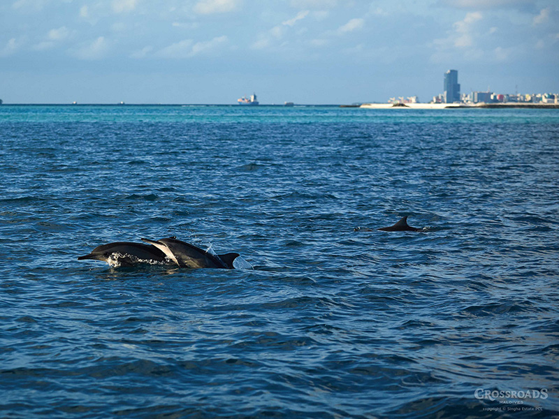 Say Hello to Dolphins at Sunset Point Maldives