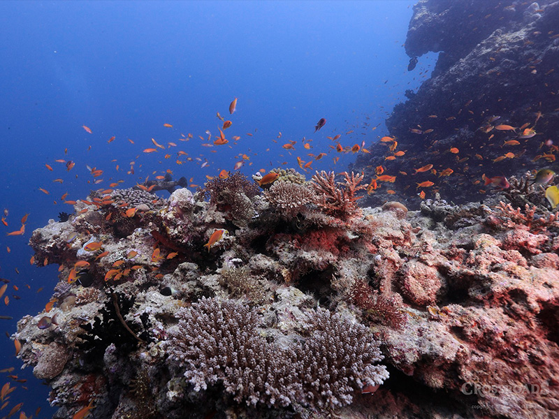 Be Blown Away by the Underwater World at the Helmuth Reef Maldives